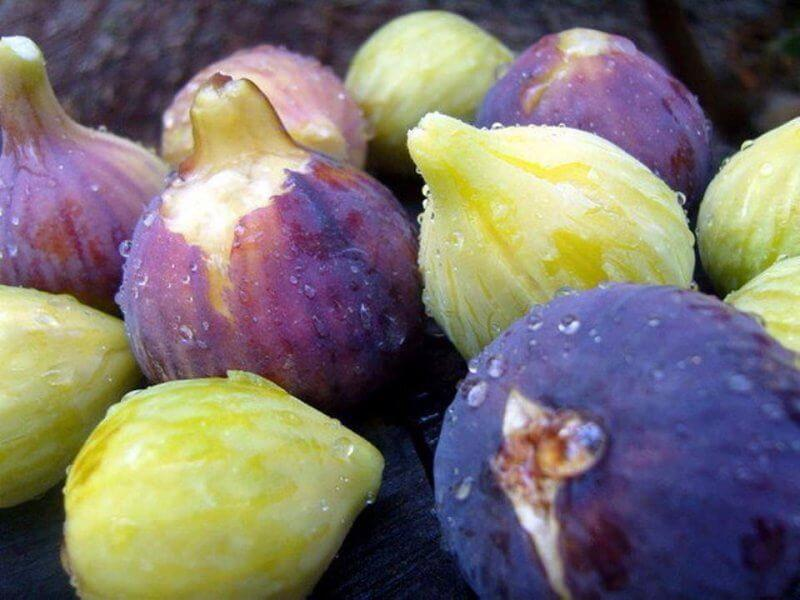 Les figues d'Aghbala